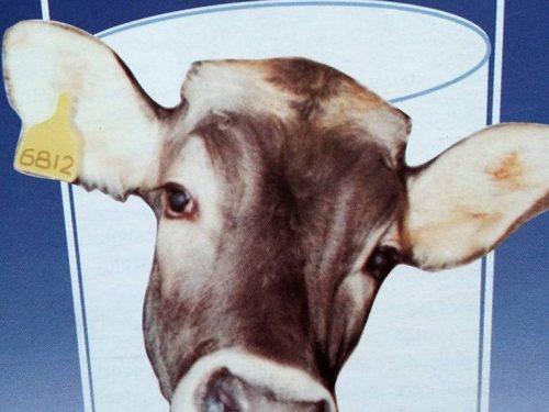 Sfrutta le mucche ma vende anche yogurt di soia