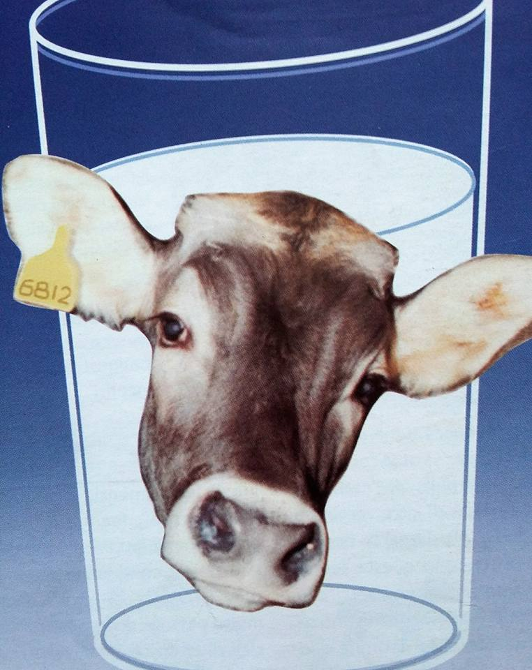 mucca bicchiere latte